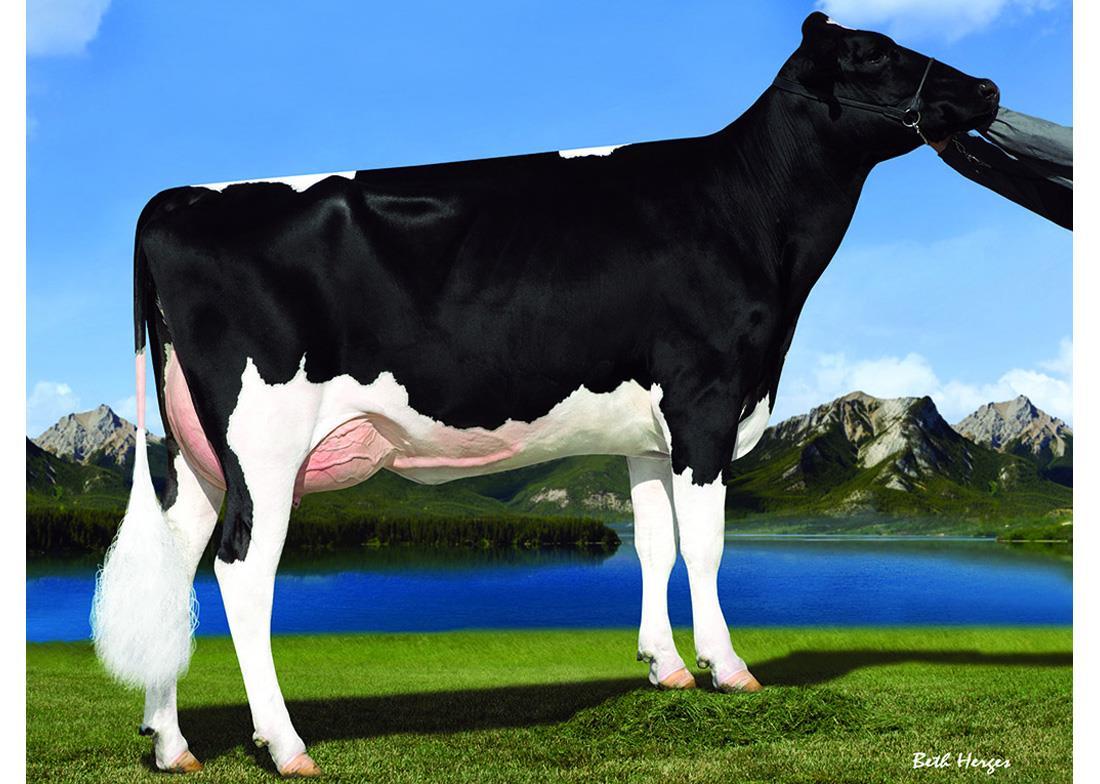 Dairy Bull - 029HO18510 - Abs Eldridge-ET