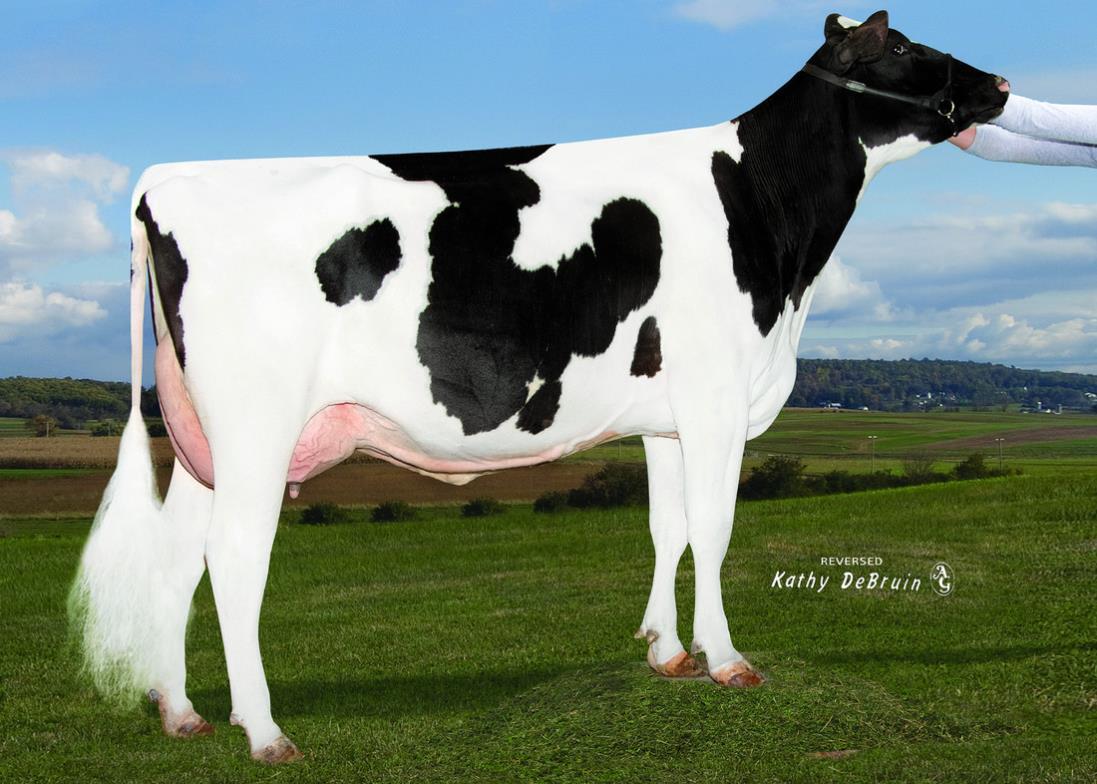 Dairy Bull - 029HO18110 - Ihg Abs Jericho-ET